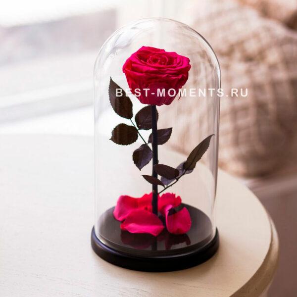 rozovaya-roza-v-kolbe